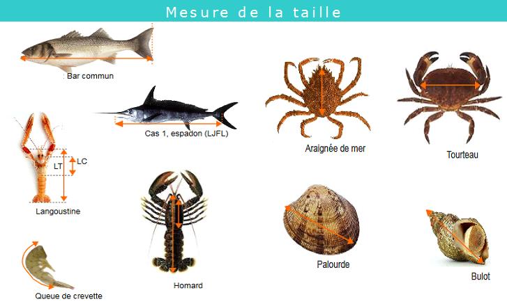 mesure_taille